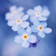 """Flower Photography Wall Art Print """"Forget-Me-Nots No. 5"""""""