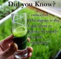 2 oz wheatgrass equivalent 4# green vegetables