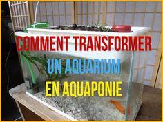 Aquaponie Pratique: Comment transformer un aquarium en aquaponie - YouTube
