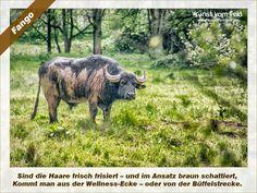 Kunst vom Feld: Fango – www.kunstvomfeld.de