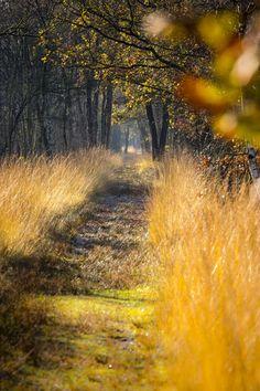 Hier wil je toch lopen?! #herfst #wandelpad #herfstkleuren