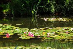 Monet Giverny Garden by Lou Haskell, via Flickr