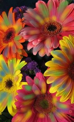 Watercolor Wallpaper, Flower Wallpaper, Photo Wall Collage, My Secret Garden, Flower Power, Beautiful Flowers, Daisy, Vacation, Floral