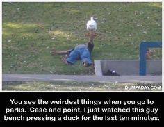 What in the Duck?