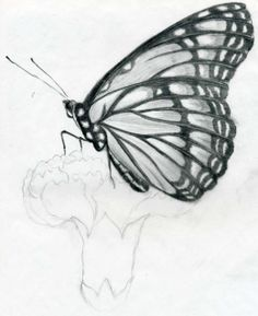 Easy pencil shading drawings birds to draw sketches beautiful of 3d Pencil Sketches, Flower Sketch Pencil, Pencil Drawings Of Flowers, Pencil Drawing Tutorials, Flower Sketches, Pencil Art Drawings, Realistic Drawings, Easy Drawings, Drawing Sketches
