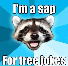 53 Best Funny Tree Puns Memes Images In 2020 Zabawne Memy Memy