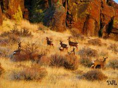 Idaho Sawtooth Mountains, Idaho Falls, Twin Falls, Old Houses, Deer, Wildlife, London, City, Nature