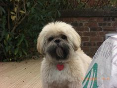 beautiful dogs | Beau Beau is a beautiful dog. Full of fun, love and life. One of a ...