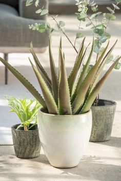 Potted Plants, Chic, Pot Plants, Shabby Chic, Elegant, Container Plants, Container Garden, Houseplants