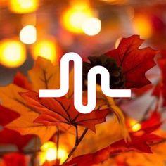 Musically logo fall
