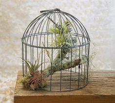 A different arrangement for the same birdcage aerium.