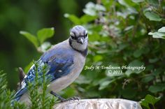 Young Jay by Judy M Tomlinson Photography