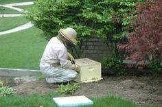 Swarm Craziness | hudsonville honey