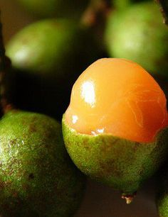 La quenepa or limoncillo, an indescribable fruit found in Puerto Rico and the Dominican Republic, with the consistency of a lychee and a sweet-tart flavor. Honduran Recipes, Haitian Food Recipes, Cuban Recipes, Jamaican Recipes, Honduran Food, Shot Recipes, Puerto Rican Cuisine, Puerto Rican Dishes, Puerto Rican Recipes