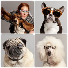 Warby Barker for dogs... Umm so cute