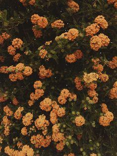 Yellow flowers. ✨