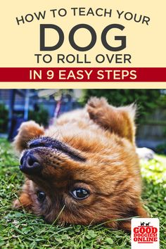 Dog Training How to Teach Your Dog to Roll Over. Check out this easy dog trick you can teach your dog with these simple dog training tips that are fun to use with your pup. Training Your Puppy, Dog Training Tips, Potty Training, Training Classes, Training Pads, Training Schedule, Training Equipment, Agility Training, Crate Training
