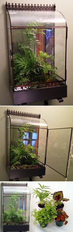 """WANT IT :: SHOP :: English Greenhouse Wall (Mountable) Terrarium with Door - Wardian Case - War152 :: $149 w/ 5 plants/soil/moss OR $129 case only (13.49 ship):: Hirt's Gardens @ Amazon.com :: [9.5""""l x 5.5""""d x 17""""h]; comes with mounting L brackets you can see below the unit. :: Love the easy access front door. I like that it swings to the side and not off where you have to hold it up while you're trying to tend to things. 