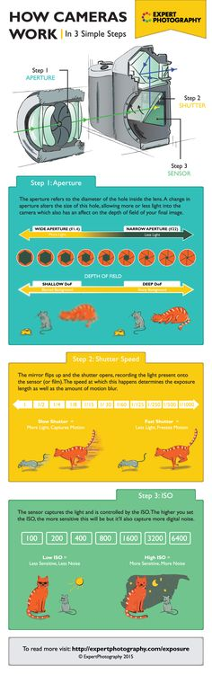 How Cameras Work Infographic - http://thedreamwithinpictures.com/blog/how-cameras-work-infographic