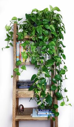 5 Growing Tips For A Perfect Pothos Plant