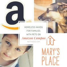 A beautiful area in Seattle houses the Amazon campus. Now they are partnering with a nonprofit to provide temporary housing for homeless families with pets!
