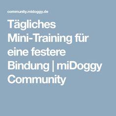 Tägliches Mini-Training für eine festere Bindung | miDoggy Community