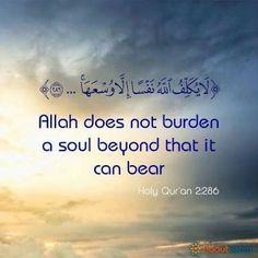 Learn Quran, Learn Islam, Islamic Love Quotes, Religious Quotes, Quran Quotes, Hindi Quotes, Arabic Quotes, Beautiful Quran Verses, Quran Karim