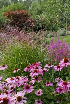 Rainbow Roses, Garden Inspiration, Backyard Landscaping, Planters, Landscape, Flowers, Gardening, Bed, Backyard Landscape Design