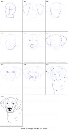 How to Draw a Labrador Face printable step by step drawing sheet : DrawingTutori Makeup 101 Draw drawing DrawingTutori Face Labrador printable sheet step Animal Sketches, Art Drawings Sketches, Easy Drawings, Animal Drawings, Drawing Sheet, Painting & Drawing, Dog Drawing Tutorial, Labrador, Face Painting Designs
