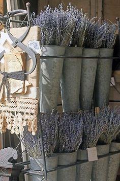 francia levendula cink vödörben - French lavender in vintage zinc buckets French Flowers, French Lavender, Lavender Blue, Lavender Fields, Lavender Garden, Provence Lavender, Lavender Bouquet, Cut Flowers, Color Lavanda