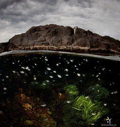 fotos-mitad-bajo-superficie-agua-Matty-Smith (12)