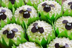 Sheep cup cakes