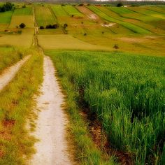 Roztocze, Poland Country Life, Country Roads, Forest Road, Eastern Europe, Happy Life, Poland, Tired, Paths, Memories