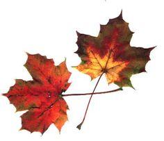 Blätterquiz