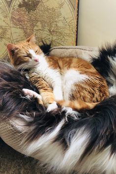 Oh my goodness - this has to be the best endorsement ever from Rene Buckle's cat snuggling into her new Jacob's sheepskin - just look at that smile! Thanks so much for sending in such a delightful picture. Snuggles, Fans, Thankful, Smile, Animals, Animales, Animaux, Animal, Animais