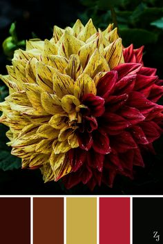 ZJ Colour Palette 64 #colourpalette #colourinspiration