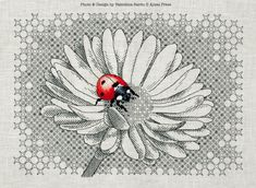 blackwork ladybug and daisy