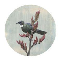 Tui's Watchtower by Nathan Secker - Art Prints New Zealand Tui Bird, Maori Designs, Tattoo Designs, Fine Art Prints, Framed Prints, New Zealand Art, Kiwiana, Wall Art For Sale, Bird Drawings