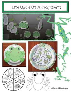 Frog activities: Life Cycle Of A Frog craft: Quick, easy & super-fun life cycle of a frog on a paper plate. Looks awesome suspended from the ceiling! Frog Crafts Preschool, Frog Activities, Paper Plate Crafts, Paper Plates, Life Cycle Craft, Lifecycle Of A Frog, Glass Frog, Butterfly Life Cycle, Frog And Toad