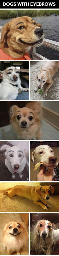 the cutest dogs with eyebrows…  one of them belongs to my daughter who I think started this silly-ass trend — next thing — lipstick and eyeshadow!
