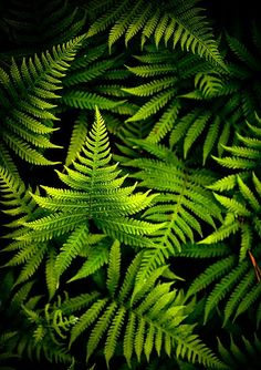 land of ferns