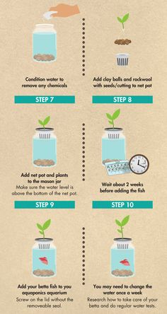Have you heard of aquaponics? Aquaponics Combines the Growing of Fish and Plants You may grow plants in water and without soil and once one does this together with growing fish you are practicing aquaponics. Pot Mason Diy, Mason Jar Crafts, Mason Jars, Mason Jar Herbs, Mason Jar Succulents, Mason Jar Terrarium, Mason Jar Herb Garden, Diy Terrarium, Aquaponics System