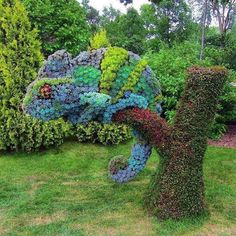 Succulents topiary in the shape of a Chameleon. Montreal Botanical Gardens Sukkulenten-Topiary in Fo Topiary Garden, Garden Art, Garden Design, Cacti Garden, Garden Whimsy, Big Garden, Tropical Garden, Cacti And Succulents, Planting Succulents