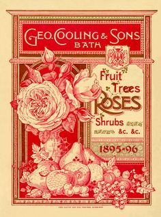 Geo Cooling & Sons Bath -- Fruit Trees, Rose and Shrubs -- Rose -- View By Flower -- RHS Prints
