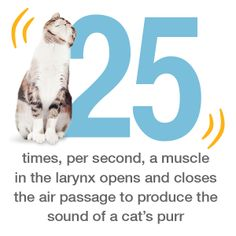 Who knew it took so many muscles to achive the purrfect pitch?