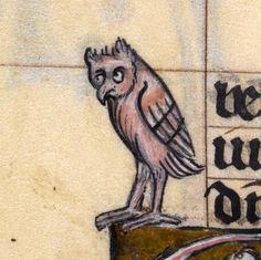 baffled owl'The Maastricht Hours', Liège 14th centuryBritish Library, Stowe 17, fol. 162v