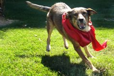 Los Perros de Buenos Aires - City improvement by baptizing stray dogs -Buenos Aires, Argentina