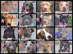 TODAY NYC ACC PLANS TO KILL THESE PUPS. A LOT OF THEM ARE PUPPIES. PLEASE SHARE! Ive put Teddy bear stickers on puppies/ https://www.facebook.com/mldsavingnycdogs/photos/a.112459638940315.1073741828.112453902274222/271674536352157/?type=1
