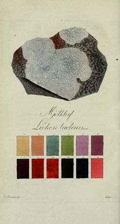Lichen colour charts from the Svensk Lafvarnas Farghistoria by Johan Peter Westring. Printed in 1805.