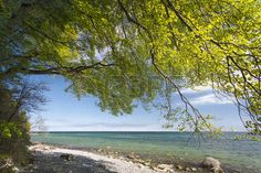 Beach Forest In Spring Stock Photos, Pictures, Royalty Free Beach ...